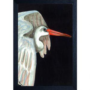 Catchii poster zwart ibis