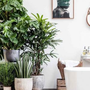 Handige tips om de Urban Jungle Trend in je interieur te halen.