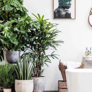 Handige tips om de Urban Jungle Trend in je interieur te halen.