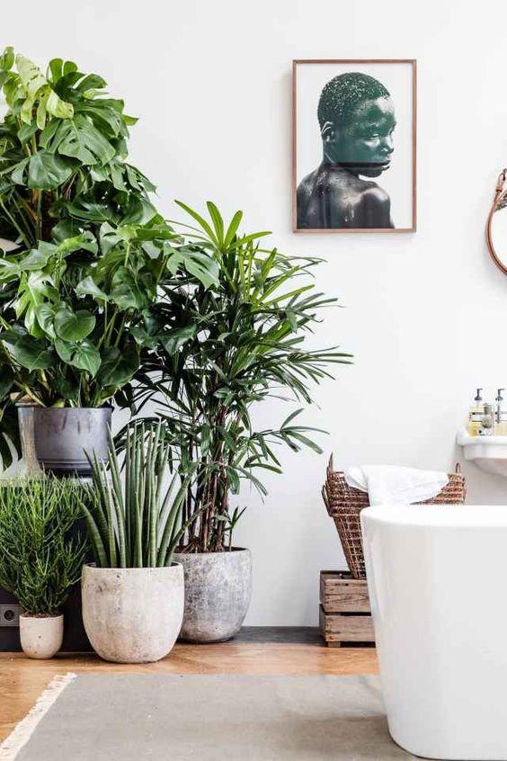 Handige tips om de Urban Jungle Trend in je interieur te halen ...
